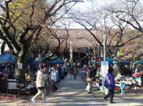 antique market in Hokekyo-ji