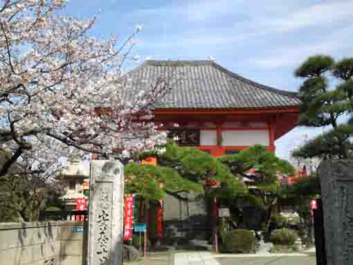 Anyoji Temple in spring