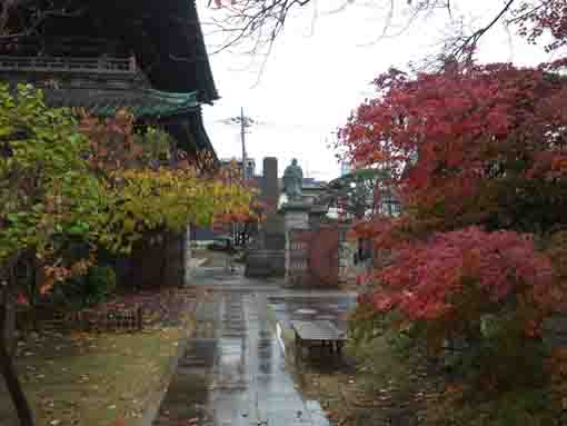 colored leaves and the niomon gate