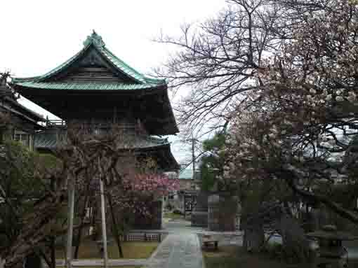 ume blossoms and the niomon gate