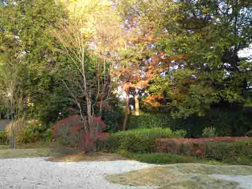 the stone garden and colored leaves