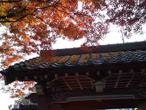 the sanmon gate covered with colored leaves