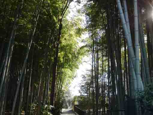 bamboo woods in Ekoin Temple