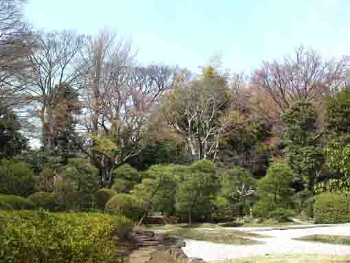 the garden in Ekoin Temple in Ichikawa
