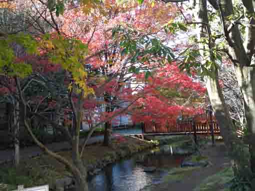 colored leaves along Ichinoe Sakaigawa