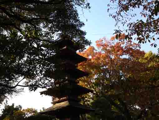 the five-story pagoda and the colored leaves