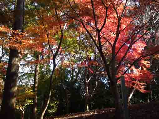 Colored leaves in Omachi Park