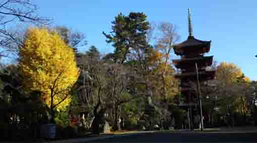 autumn leaves in Hokekyo-ji Temple