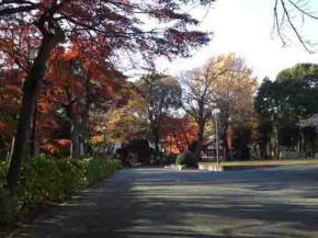 Mamasan in fall