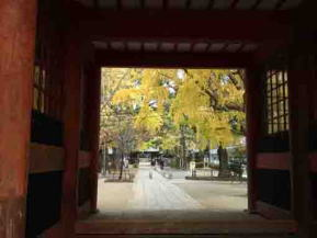 fall in Katsushika Hacimangu Shrine