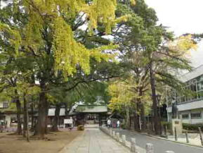 ginko trees and the main gate of the shrine