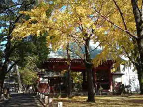 the Zuishinmon Gate in the colored trees