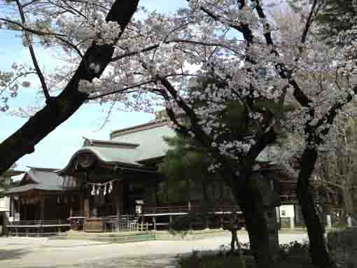the main hall and cherry blossoms