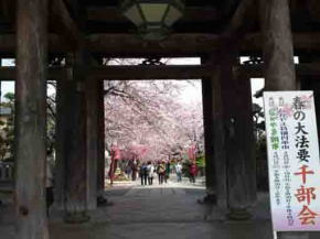 Cherry blossoms through the Niomon