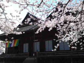 Soshido Hall over cherry blossoms