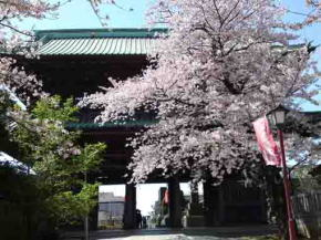 the niomon gate with cherry blossoms