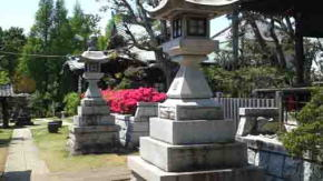 azaleas between the stone lanterns