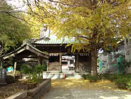 Niomon Gate in Jokoji