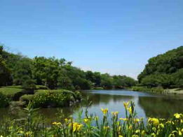 early summer in Junsaike Pond Park