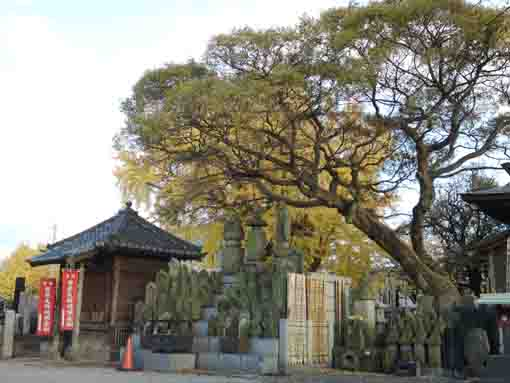 the koshindo hall and stone statues