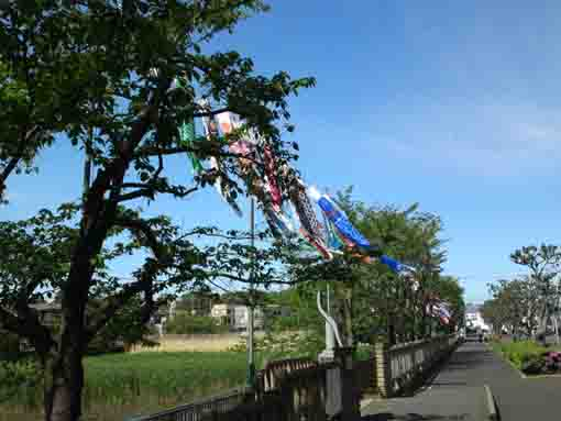 koinobori flags in Kozato Park ①