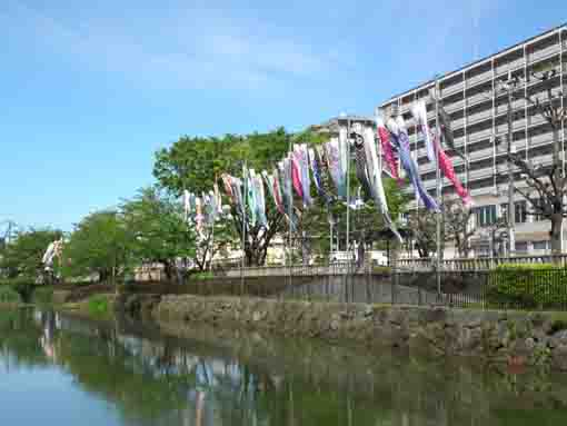 koinobori flags in Kozato Park ②