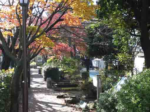 colored leaves along Komatsugawa