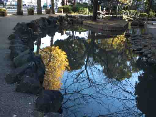gingko trees in the water