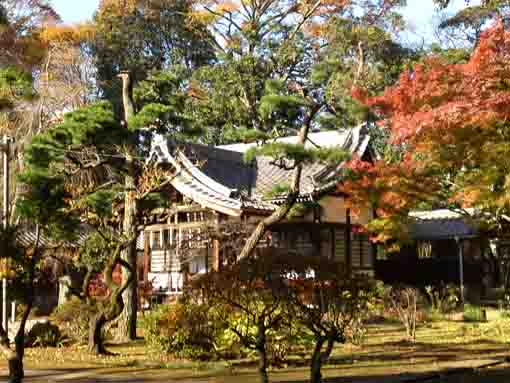 autumnal leaves colored Daikokudo Hall