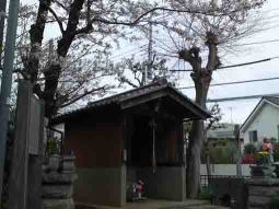 cherry blossoms and Miyonoin Shrine