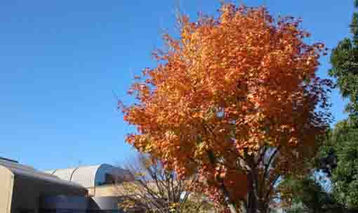 colored leaves at the museum