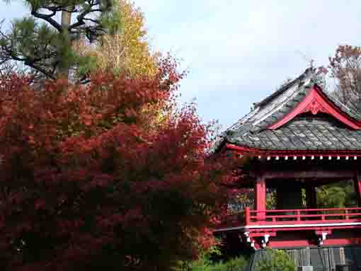 red maple leaves and the bell tower
