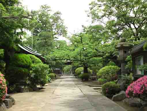 the approach road of Myoshoji Temple