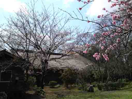 a thatched roof and cherry blossoms