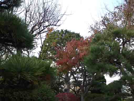 fall in Shinbori Garden