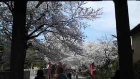 The Cherry Blossoms through Nio-mon