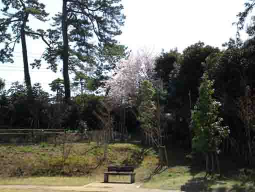 Nishifuna Yonchome Green Zone in spring