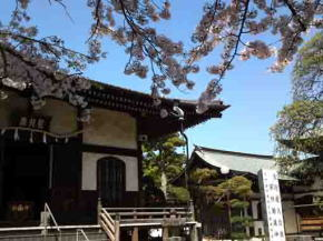 Aragyo Hall and cherry blossoms