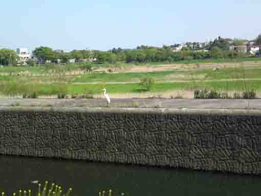 Oogashiwagawa Retention Basin