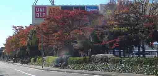 colored leaves along the street