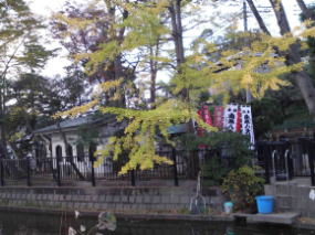 the Hachidai-ryuo-do hall in fall