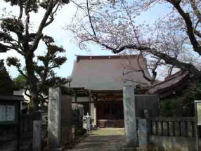 a cherry tree beside the gate of Myoshoji