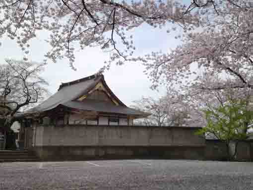 cherry trees in Myoshoji Temple
