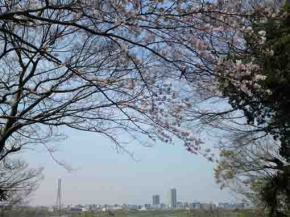 the views from Nogikuen in Spring