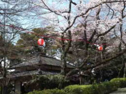 Shiensosha in spring