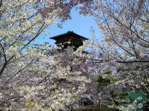 a fire lookout covered with cherry blossoms