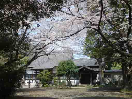 cherry trees and the main hall of Soneiji