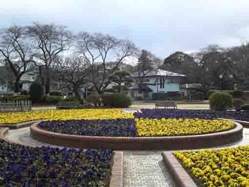 flowers in early spring in Satomi Park