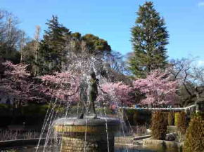 Kawazu Zakura and the spring