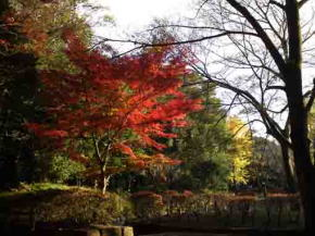 colored leaves in Satomi Park